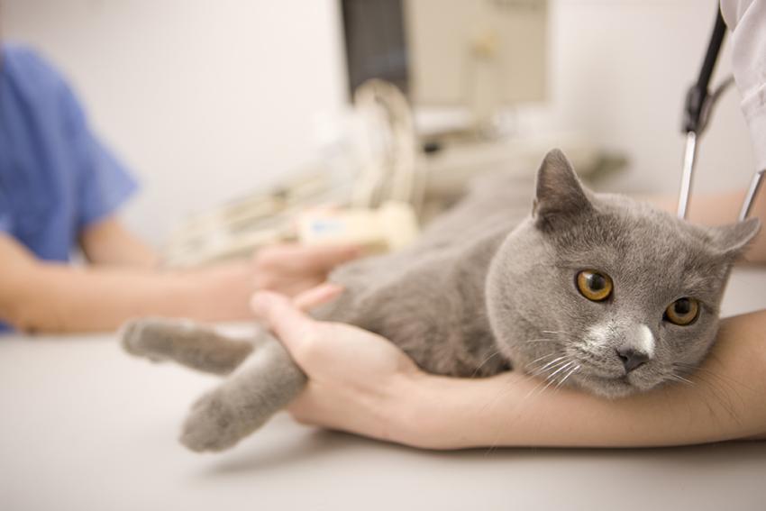 อาการที่บ่งบอกว่า แมวของคุณ กำลังป่วย
